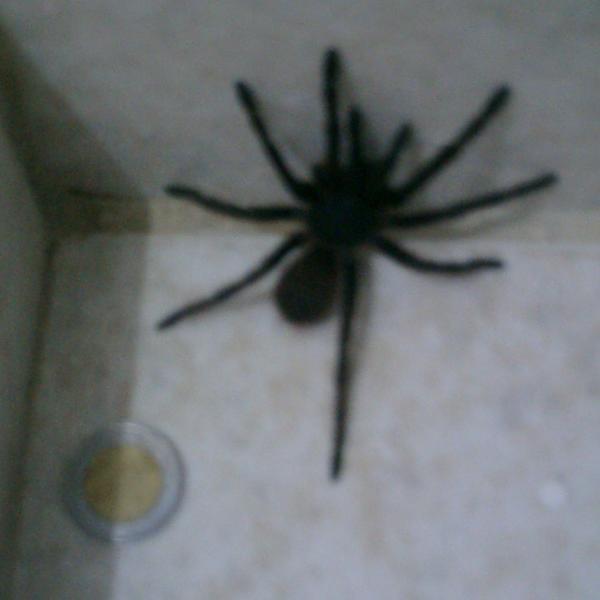 Spider in Shower